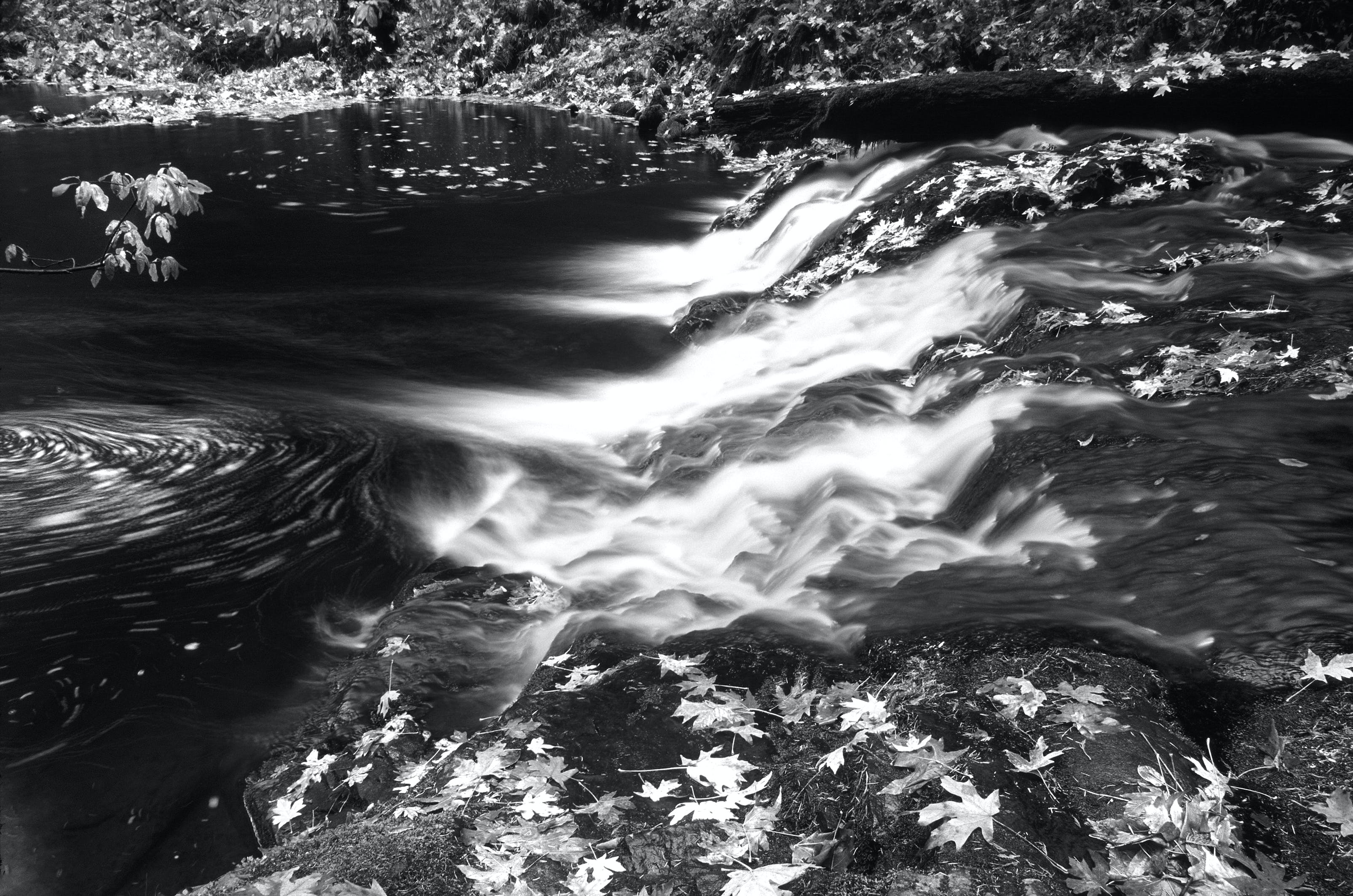 Greyscale Photo of Water and Leaves