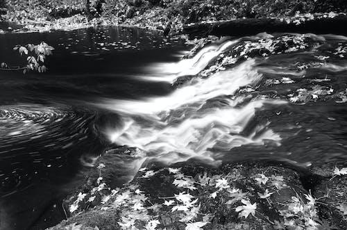 Ilmainen kuvapankkikuva tunnisteilla joki, kivikkoinen, lehdet, mustavalkoinen