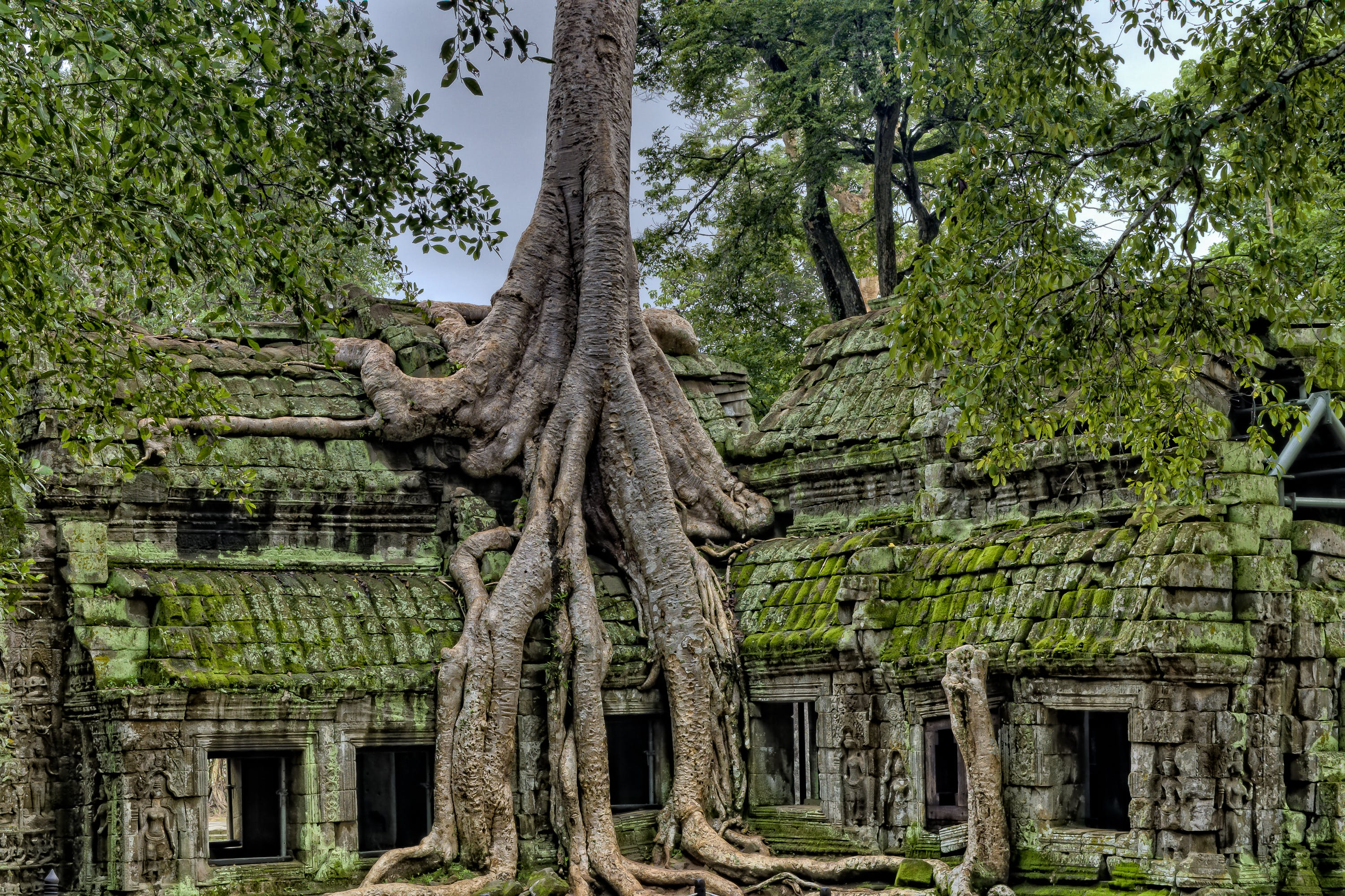 Building With Tree