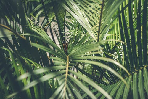 1000 Beautiful Tropical Leaves Photos Pexels Free Stock Photos ✓ free for commercial use ✓ high quality images. 1000 beautiful tropical leaves photos