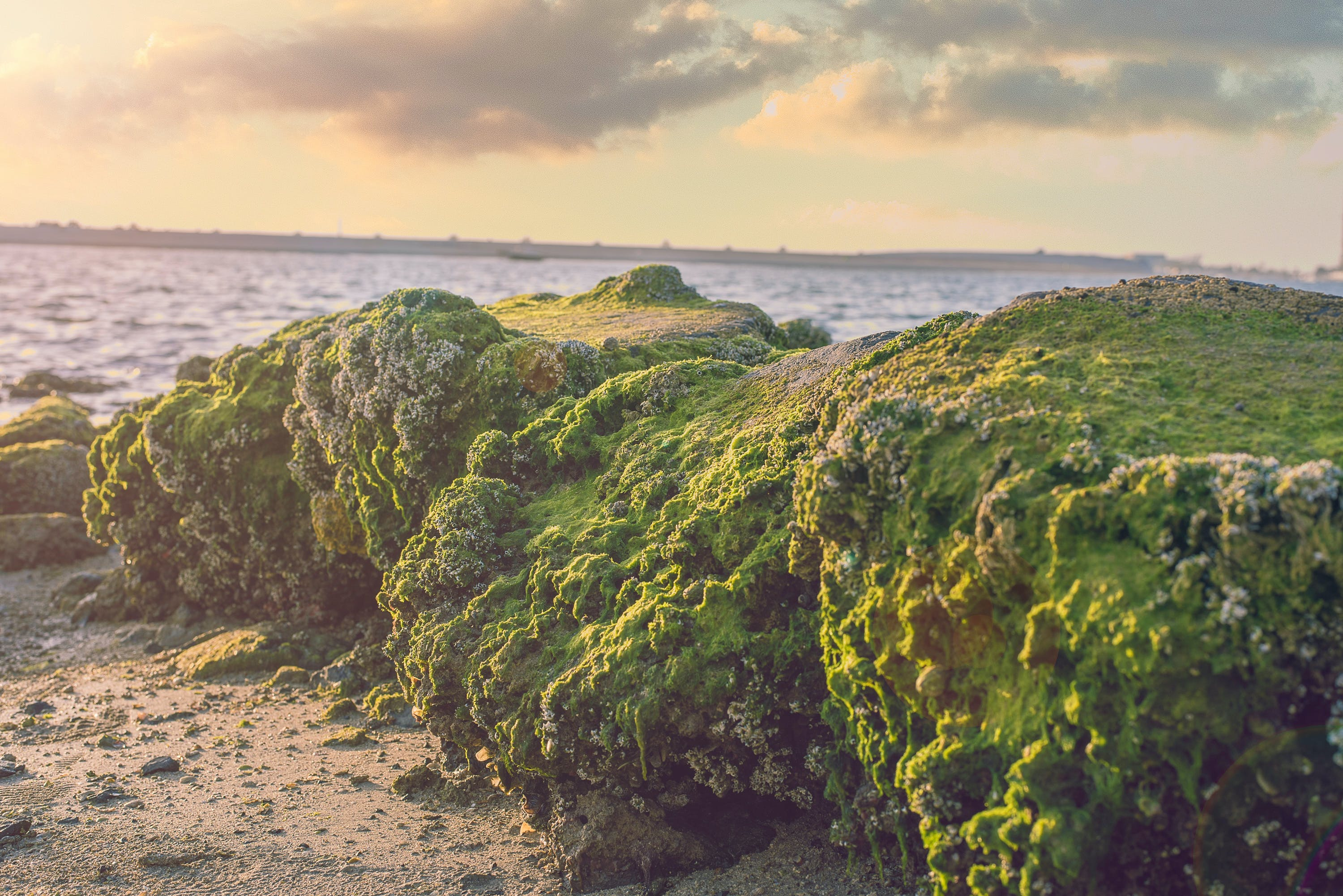 Free stock photo of coral, evening sun, golden sunset, natue