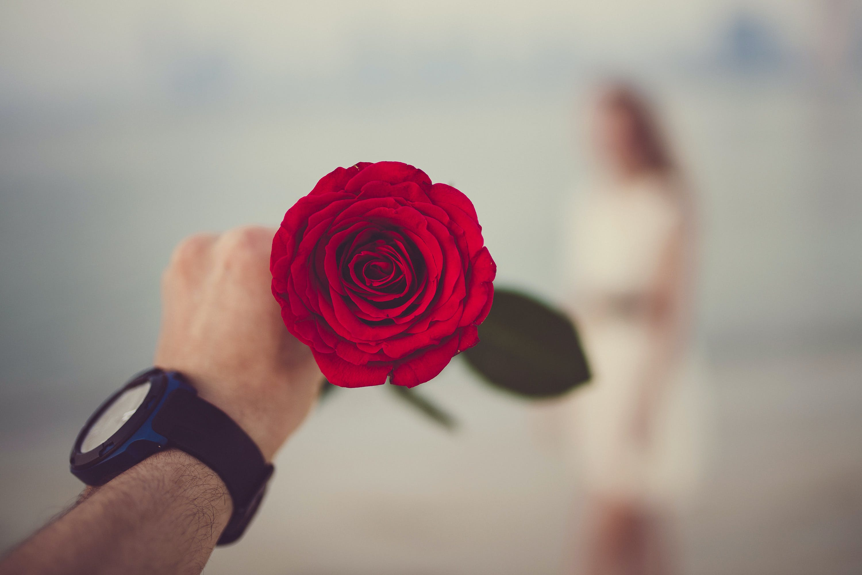 Person Holding Red Rose Selective Focal Photo