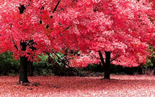 Бесплатное стоковое фото с природа, фото природы