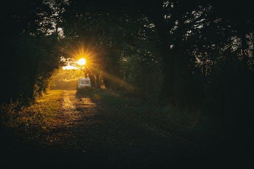 Gratis stockfoto met achtergrondlicht, bomen, dageraad, donker