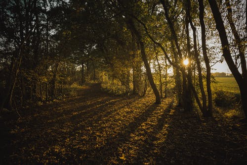 Gratis arkivbilde med bakbelysning, daggry, dagslys, dyrket jord