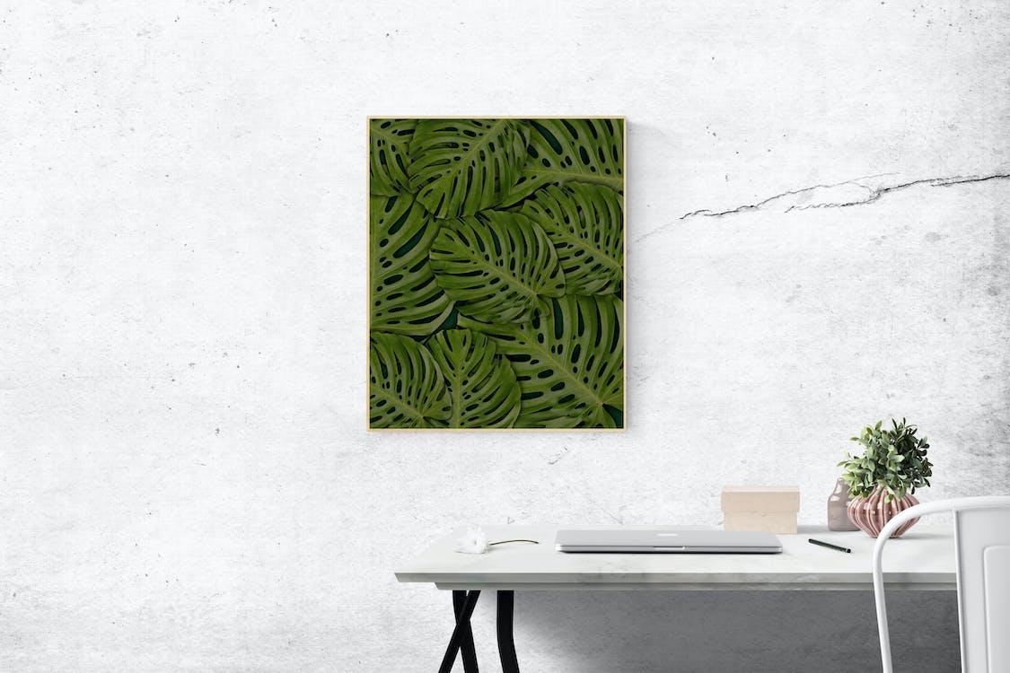 壁に取り付けられた長方形の緑のスイスチーズの葉の植物の写真