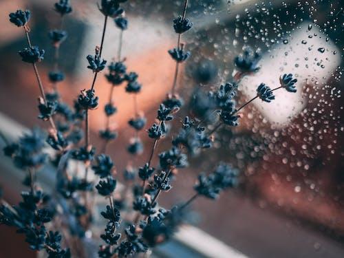 Fotobanka sbezplatnými fotkami na tému dážď, dekorácia, detailný záber, exteriéry
