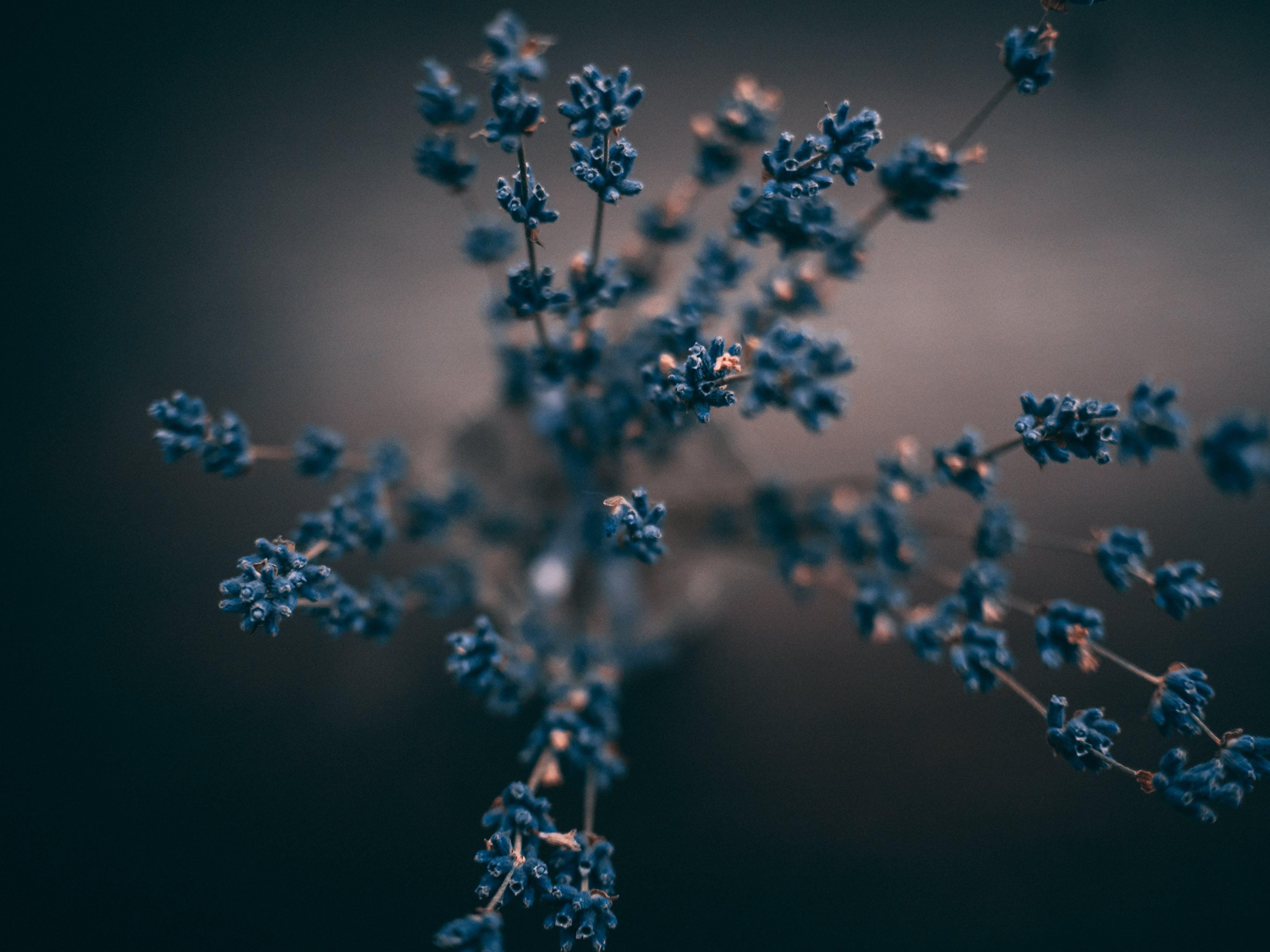 Free stock photo of blue, calm, close up, close-up