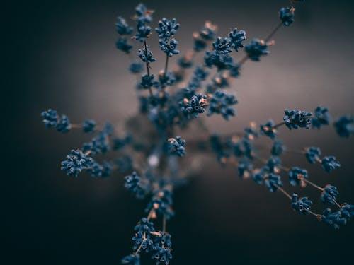 Kostenloses Stock Foto zu blau, blume, nahansicht, natur