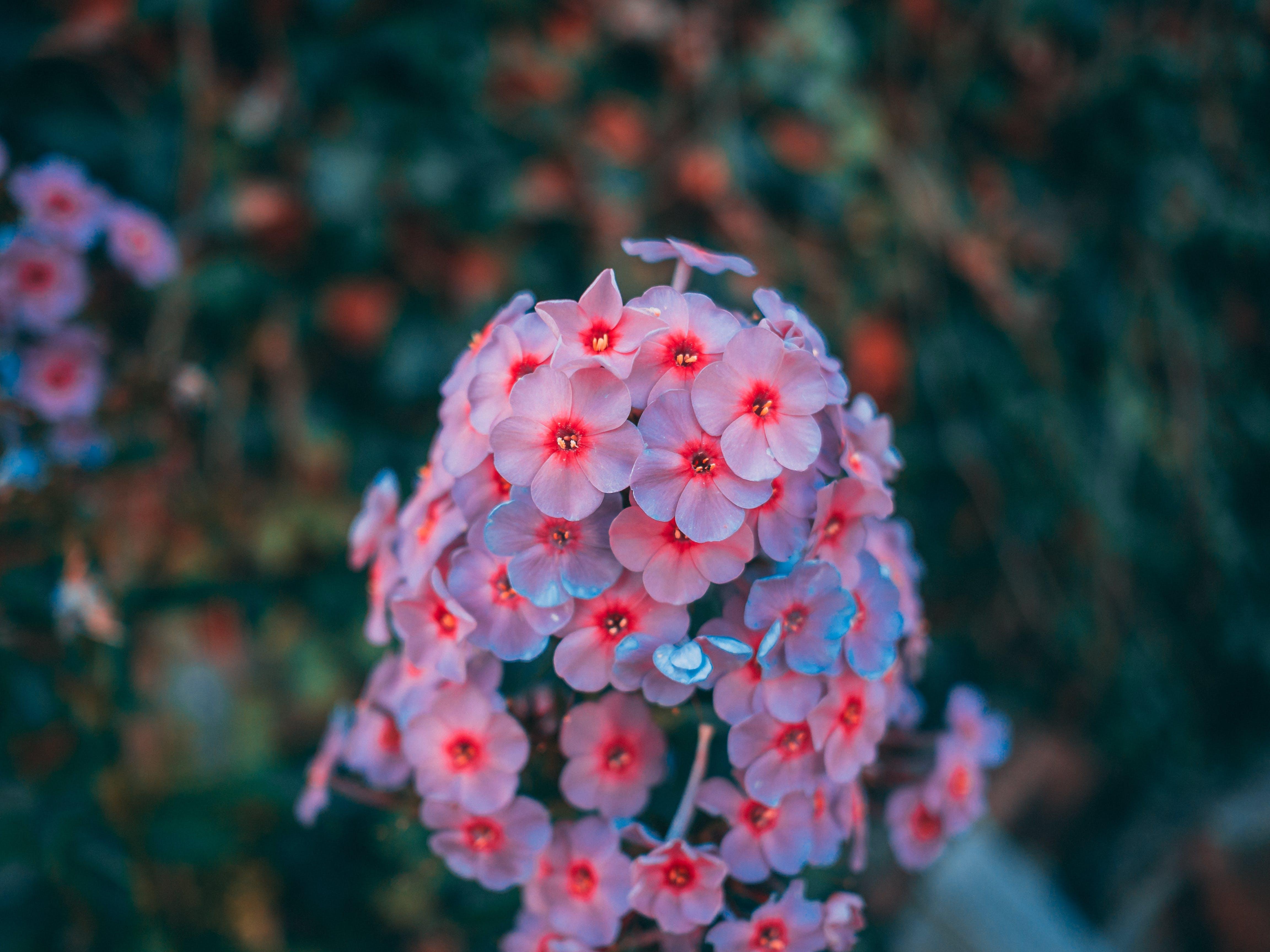 Foto stok gratis alam, bagus, berbunga, bunga-bunga
