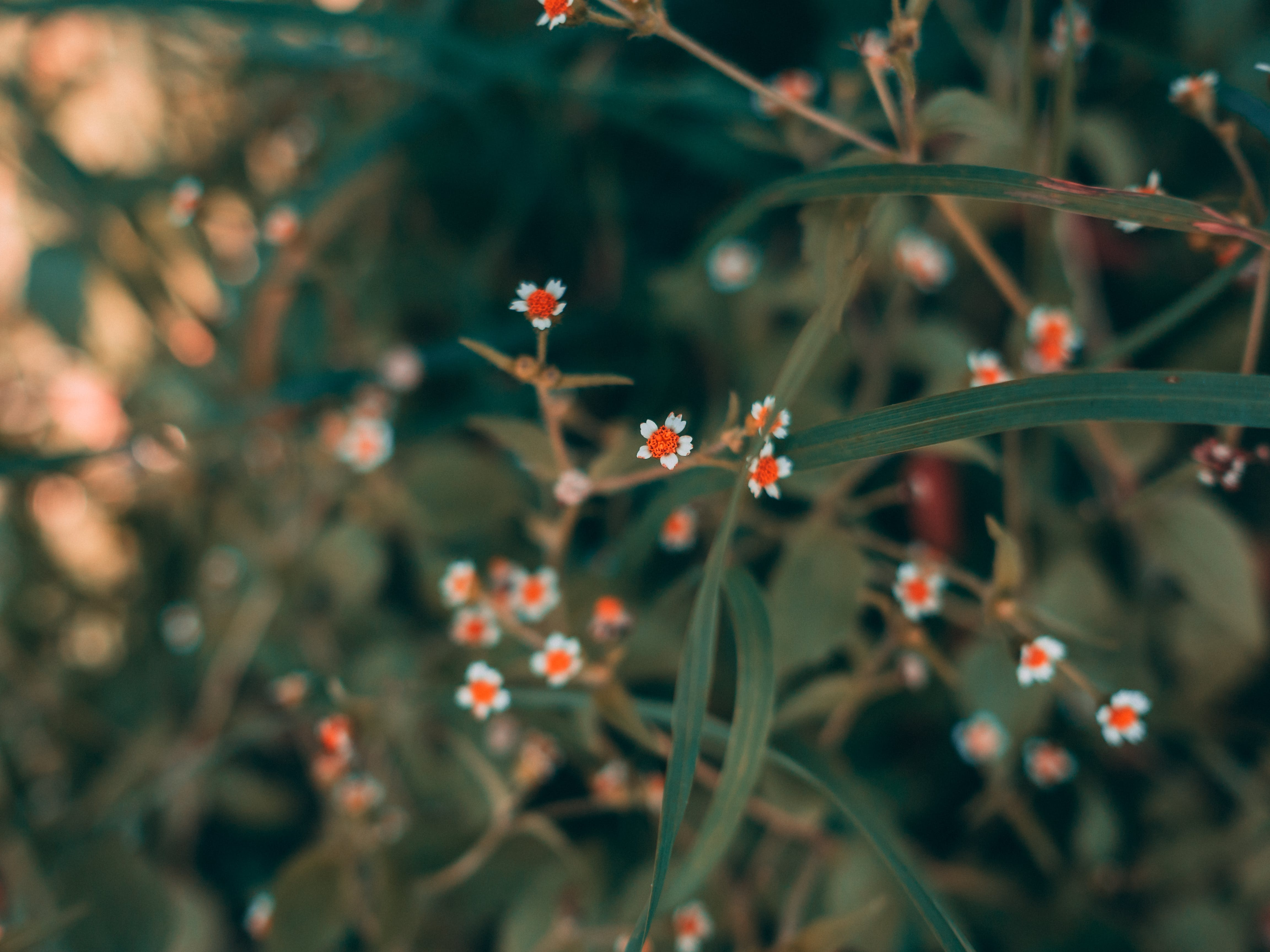 Free stock photo of close up, close-up, flower, garden
