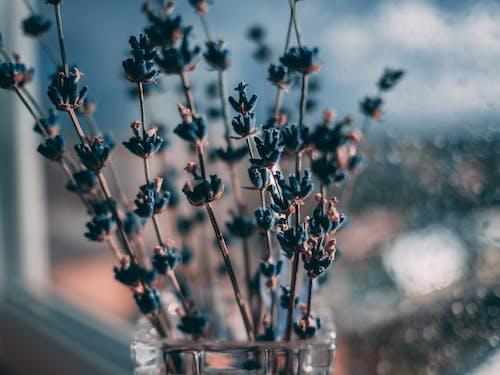 Gratis lagerfoto af blå, blomster, close-up, farver