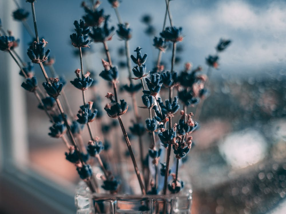 blå, blomster, close-up