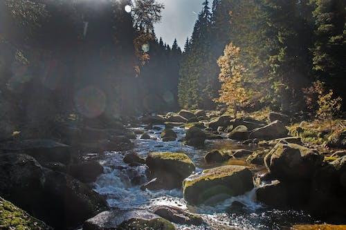 Kostnadsfri bild av kaskad, landskap, miljö, mossa