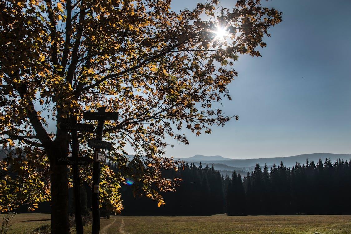 blauen berge, šumava