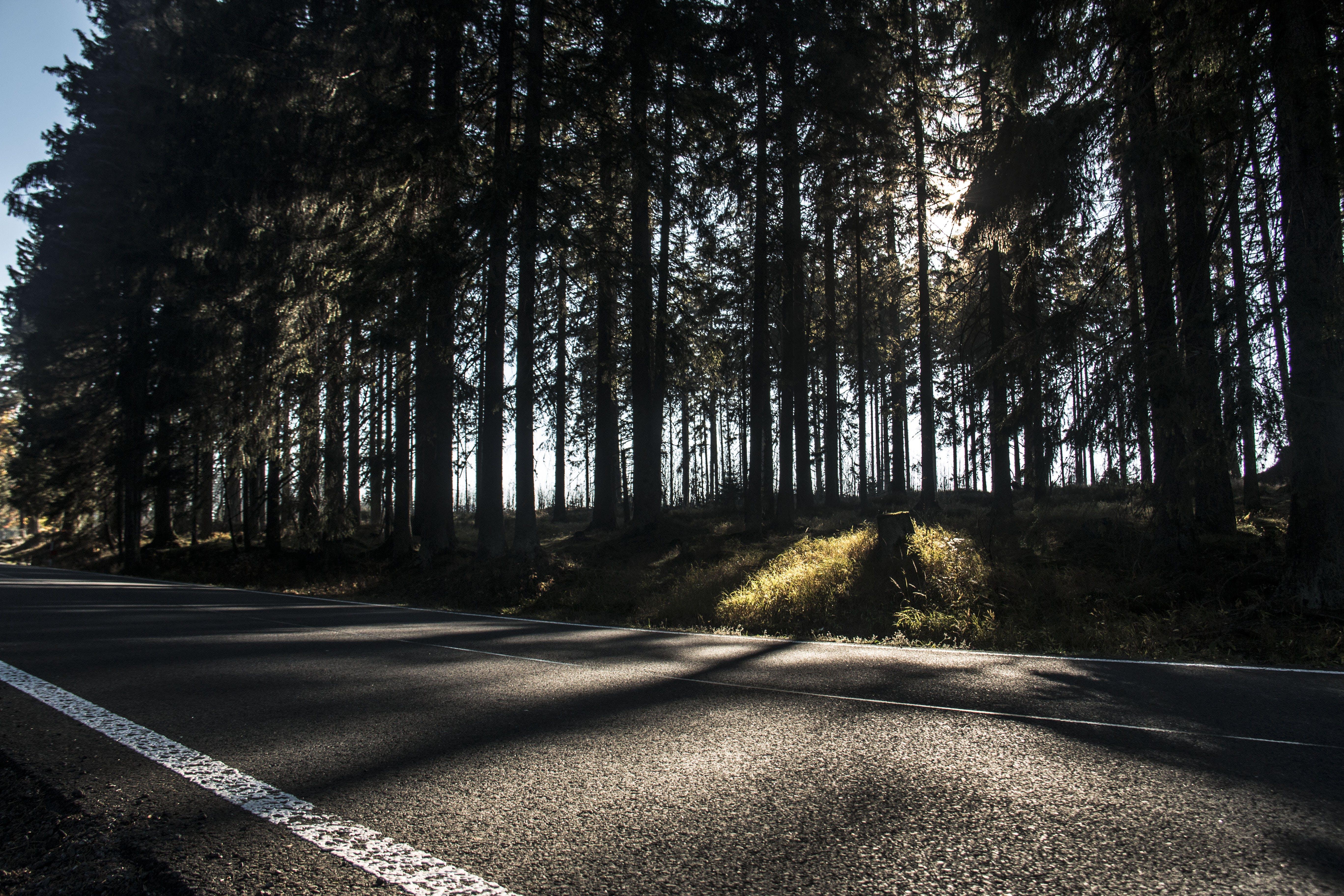 Free stock photo of road, way, asphalt, road trip