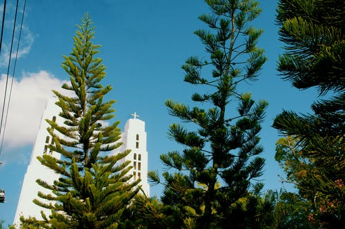 Low-angle Photography of Pine Trees With View of White Cathedral