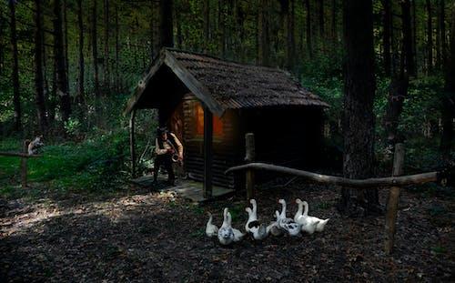 Základová fotografie zdarma na téma chata, denní světlo, dřevěný, dřevo