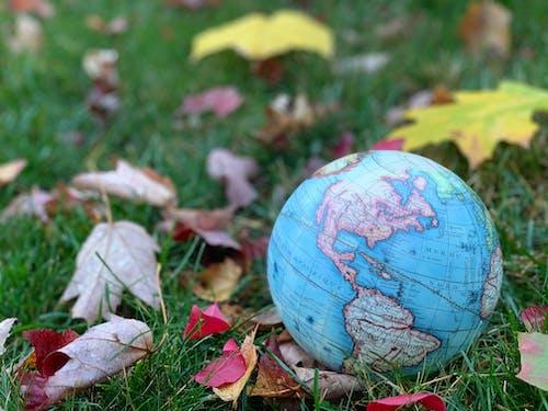 Free stock photo of fall colors, fall foliage, fall leaves
