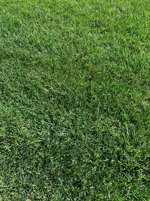 Free stock photo of blades of grass, grass, green grass, lawn