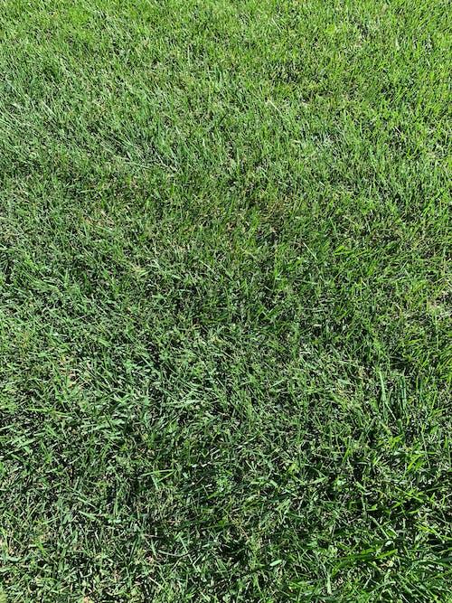 Free stock photo of blades of grass, grass, green grass