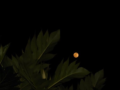 Low Angle View of Leaves Under Full Moon
