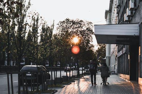 Immagine gratuita di alba, alberi, auto, città