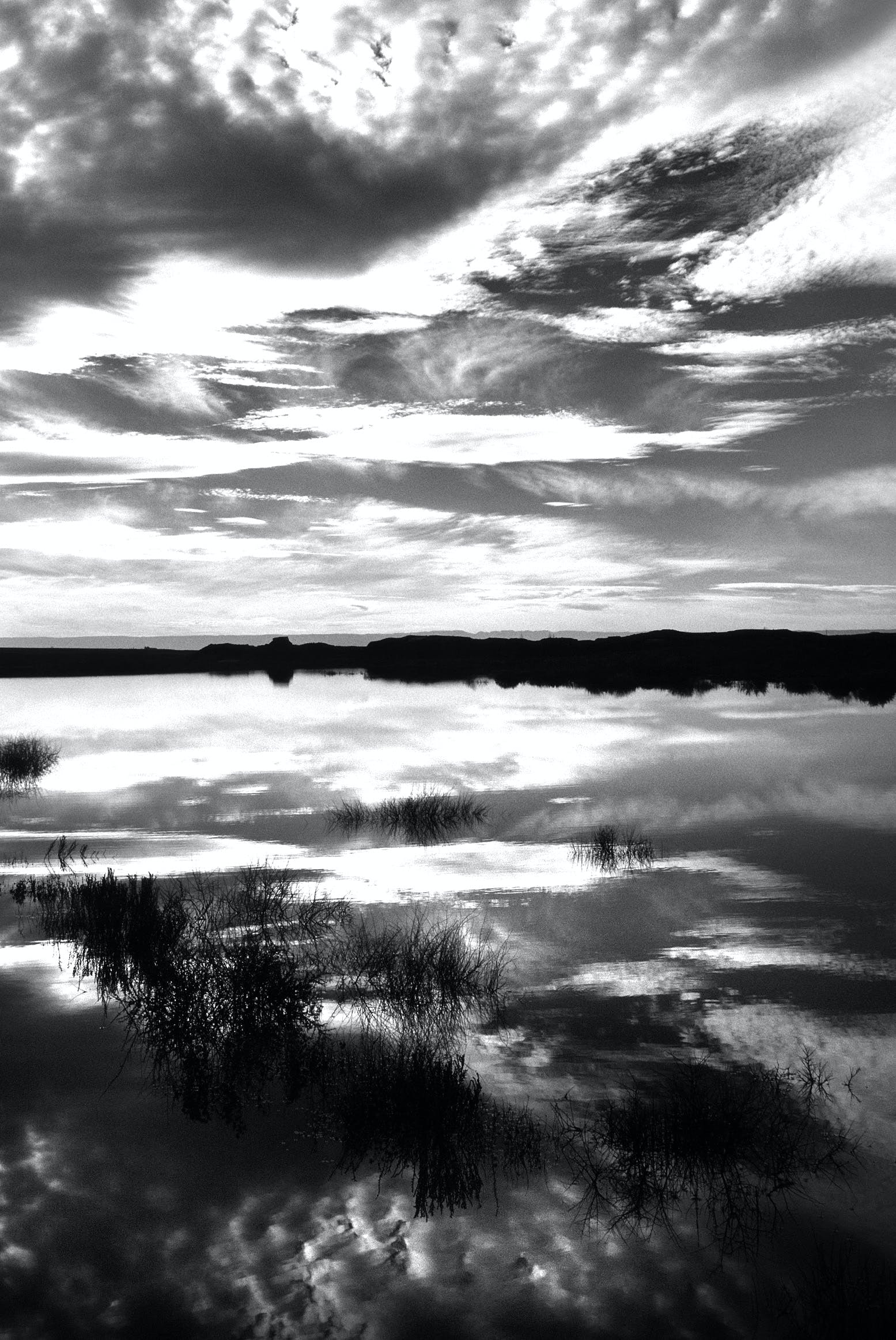 Grayscale Photo of Grass Near Body of Water Under Clouds