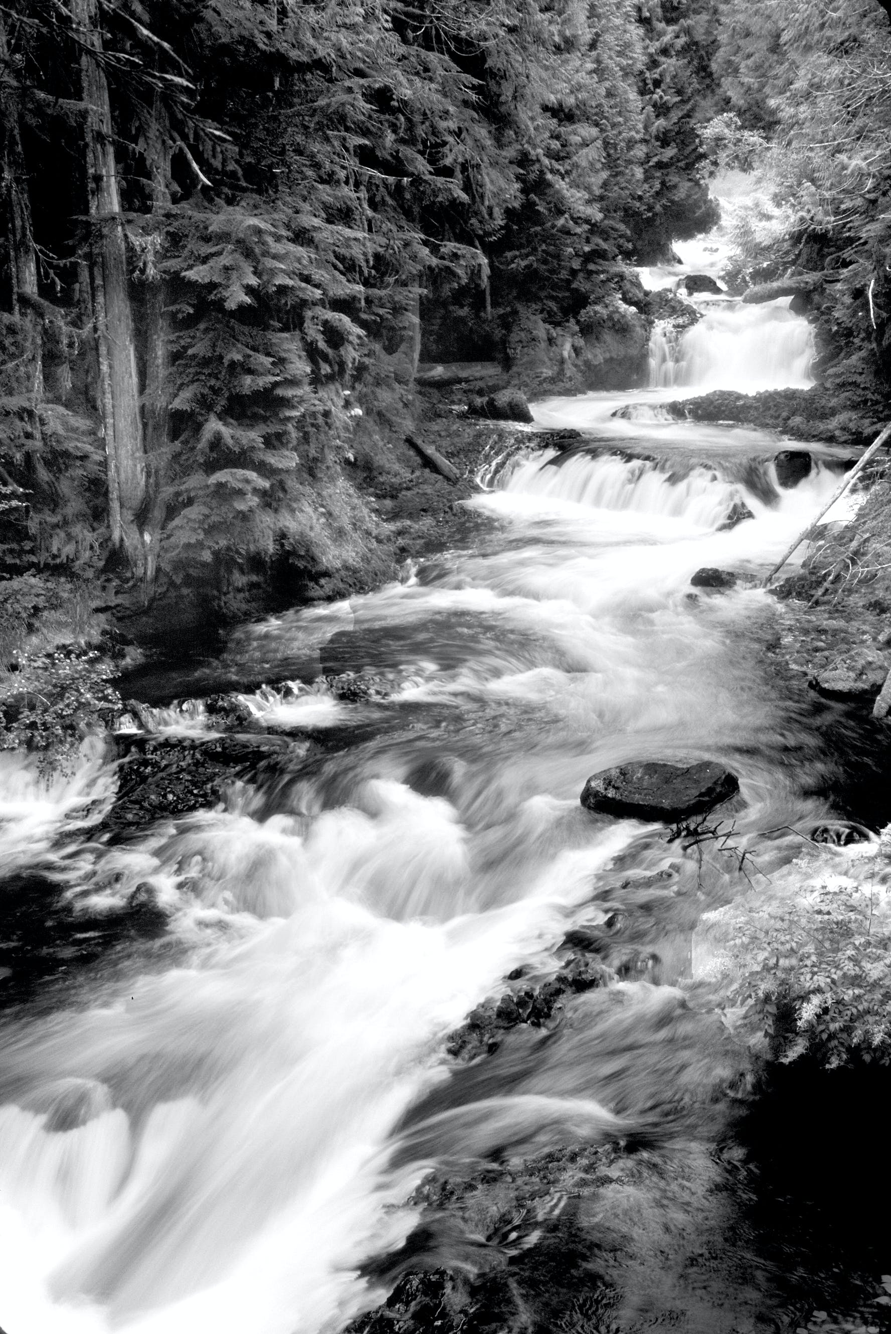 Grayscale Photography of Running River Surrounded Forest during Daytime