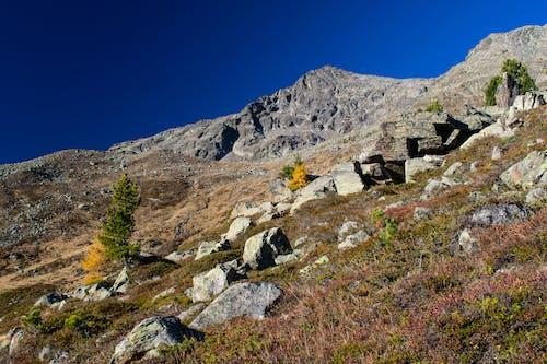 Photos gratuites de alpes, arbres, champ, couleurs automnales
