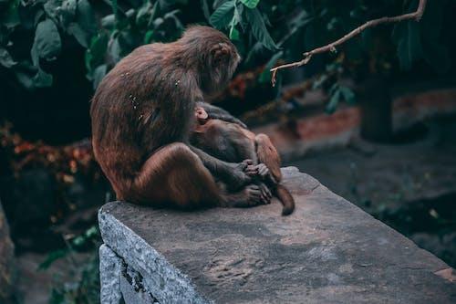 Free stock photo of animal lover, baby monkey, brownstones, city lights