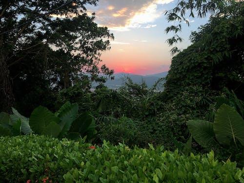 Бесплатное стоковое фото с голубой, закат, зеленый, идеальный