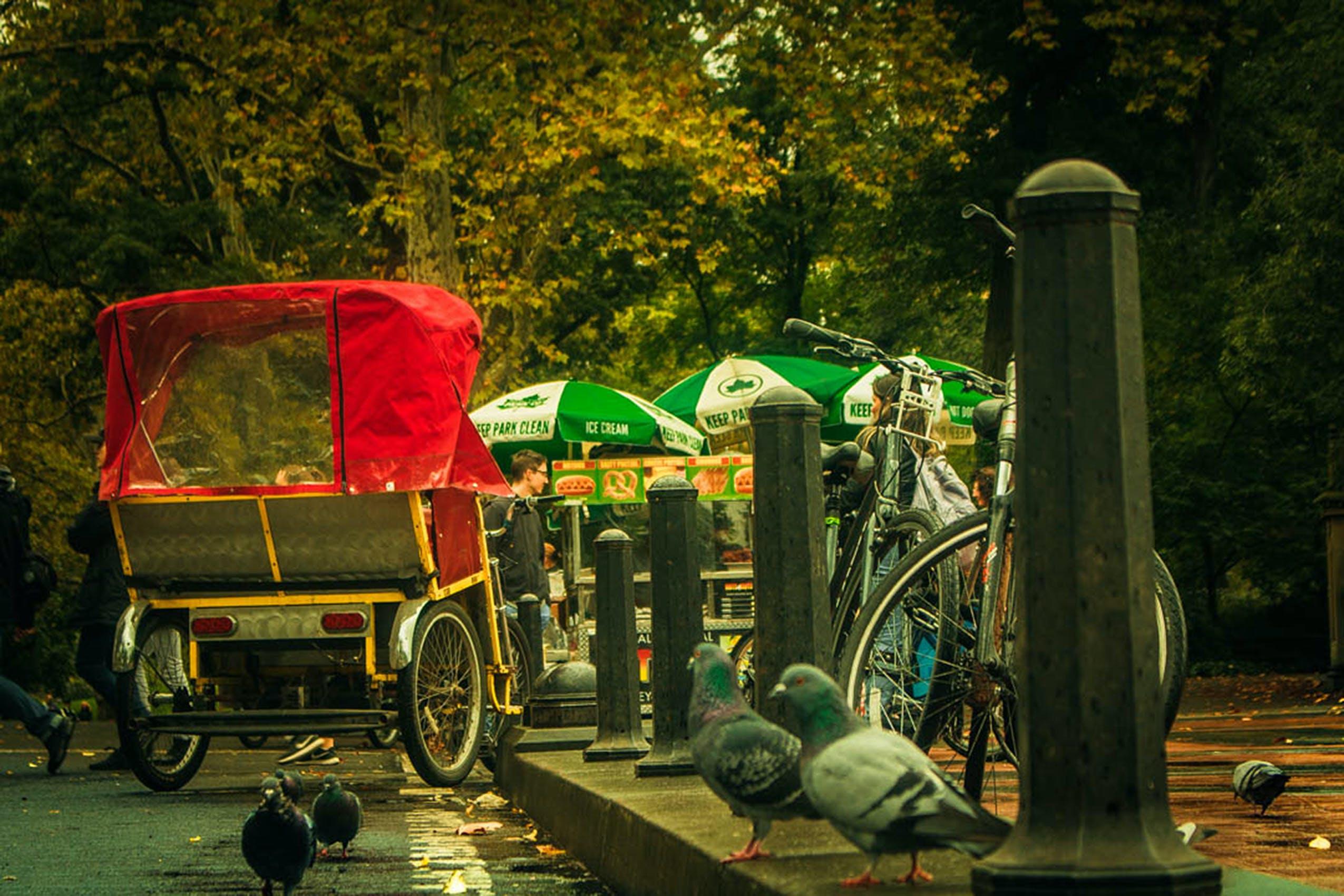 Free stock photo of #birds, #central park, #city parks, #city vibes