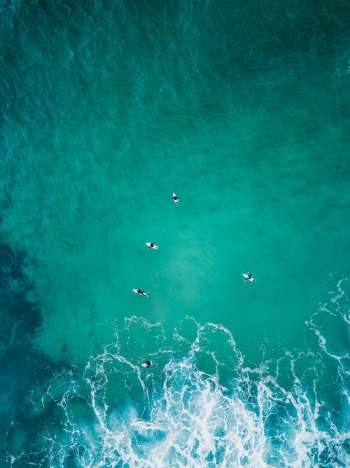 Základová fotografie zdarma na téma čeření, maketa, moře, mořská voda