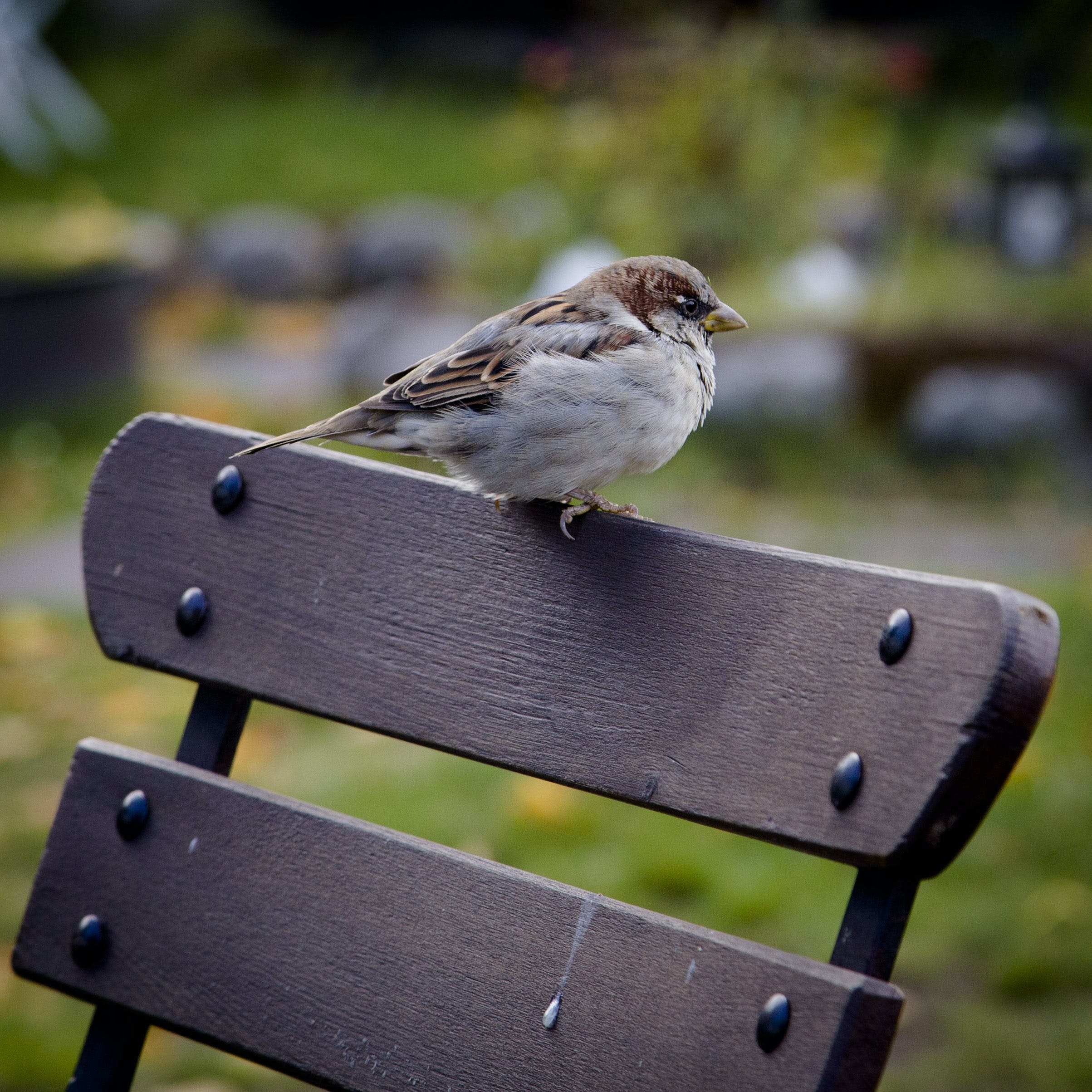 White and Brown Bird on Bench