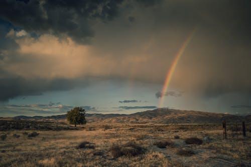 Photos gratuites de arbre, arc-en-ciel, aube, ciel