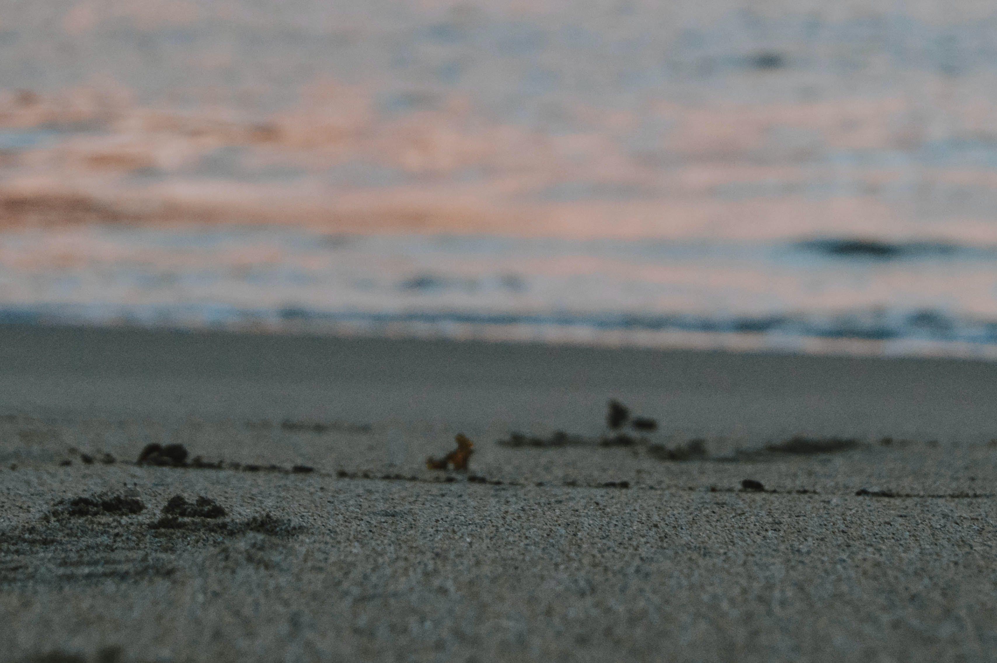 Free stock photo of alone, beach, black sand, blue water