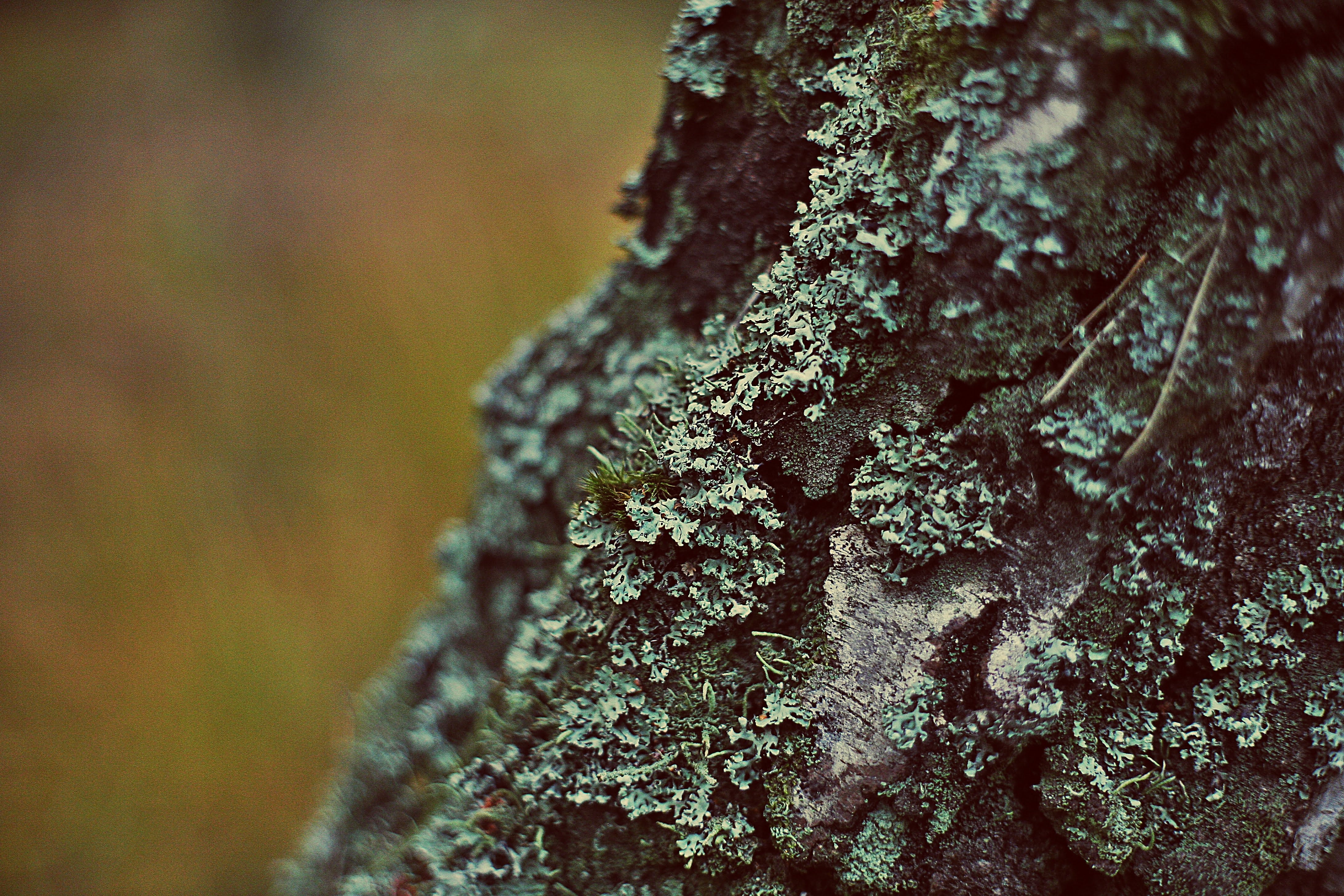 Free stock photo of bark, close up, focus, tree