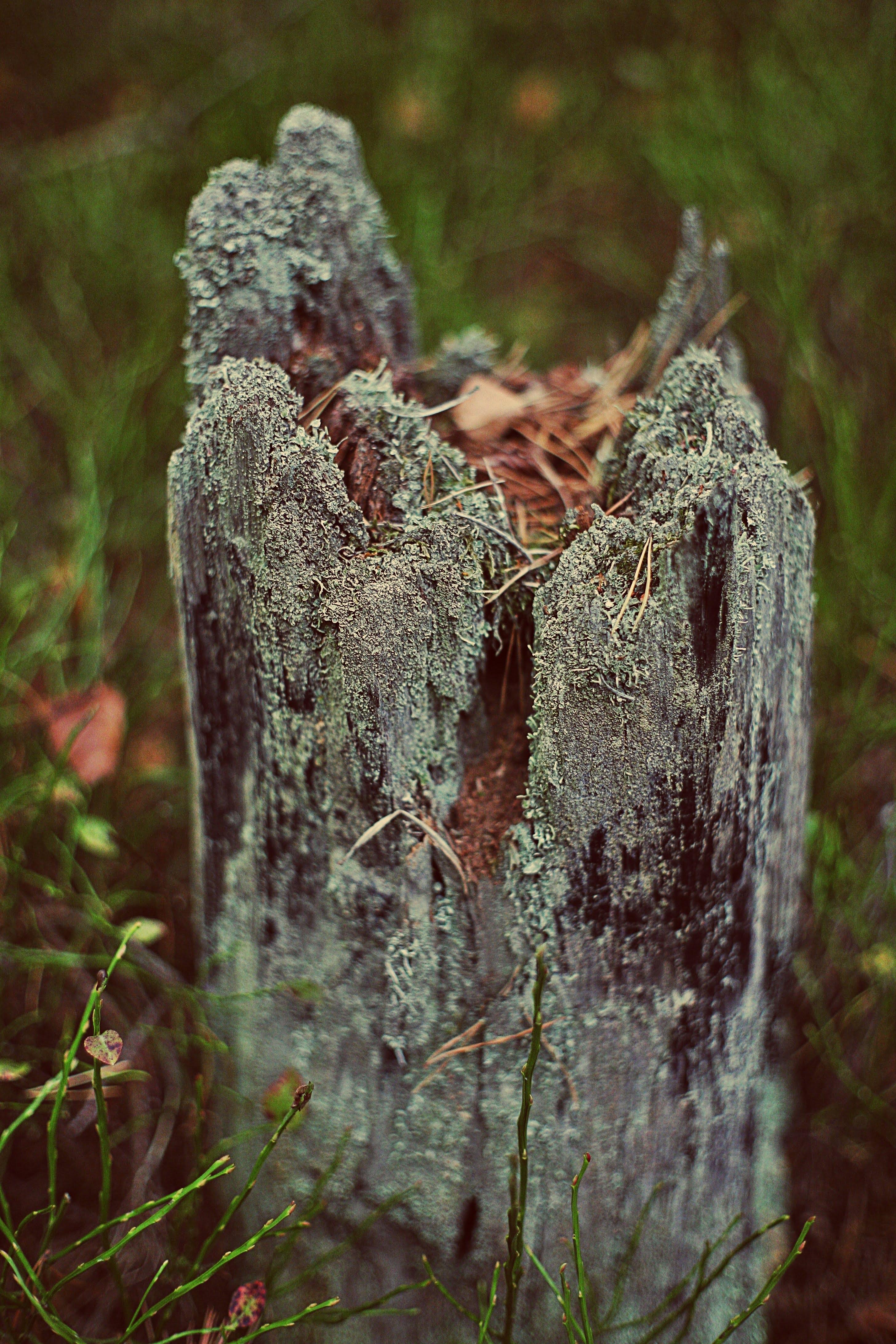 Бесплатное стоковое фото с гриб, окружающая среда, пейзаж, природа
