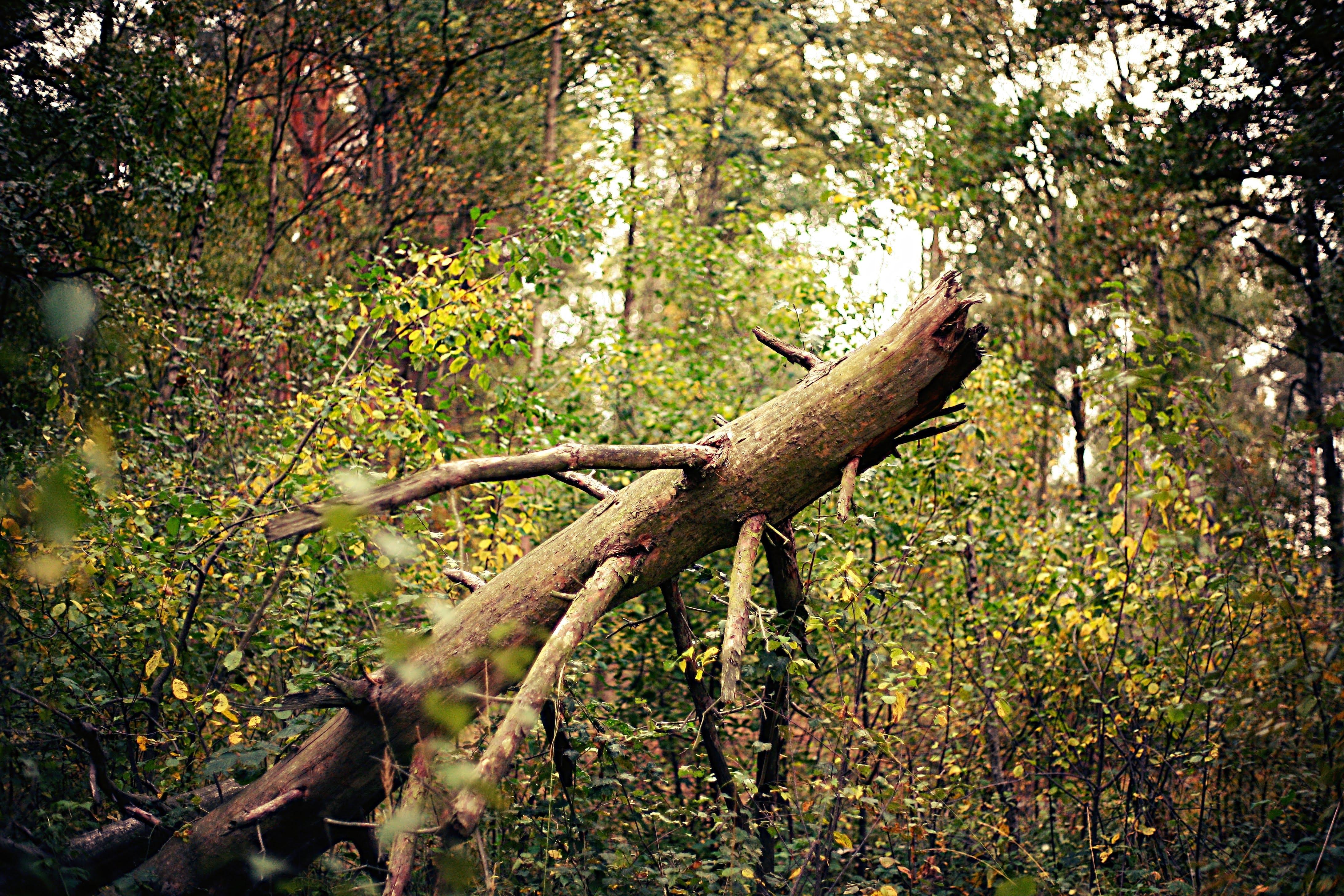 Бесплатное стоковое фото с лес, разбитый, сломанное дерево