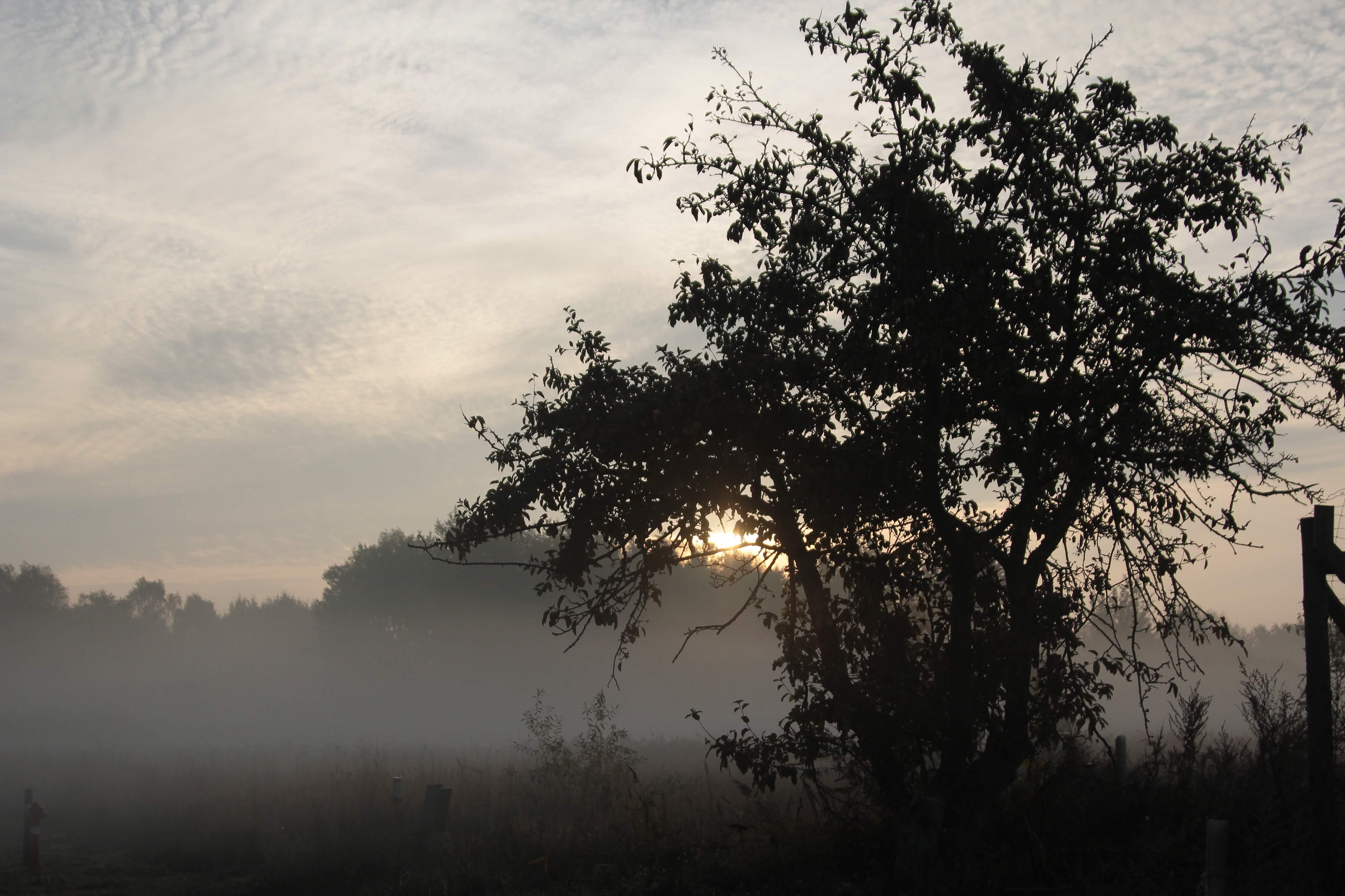 Imagine de stoc gratuită din arbore, ceață, profil, răsărit
