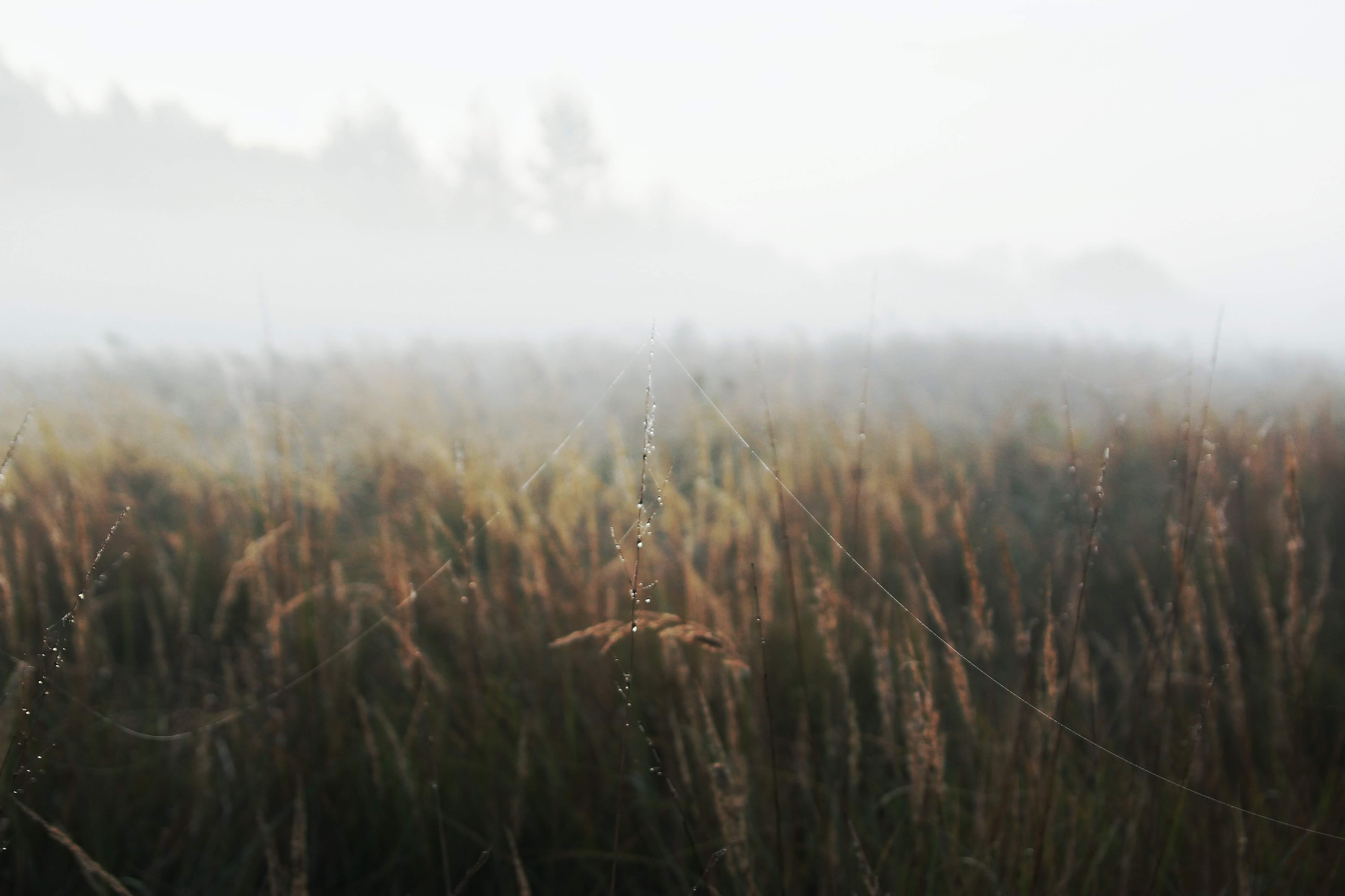Бесплатное стоковое фото с зерновые, пастбище, паутина, поле