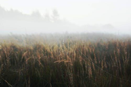 Бесплатное стоковое фото с зерновые, интернет, паутина, поле