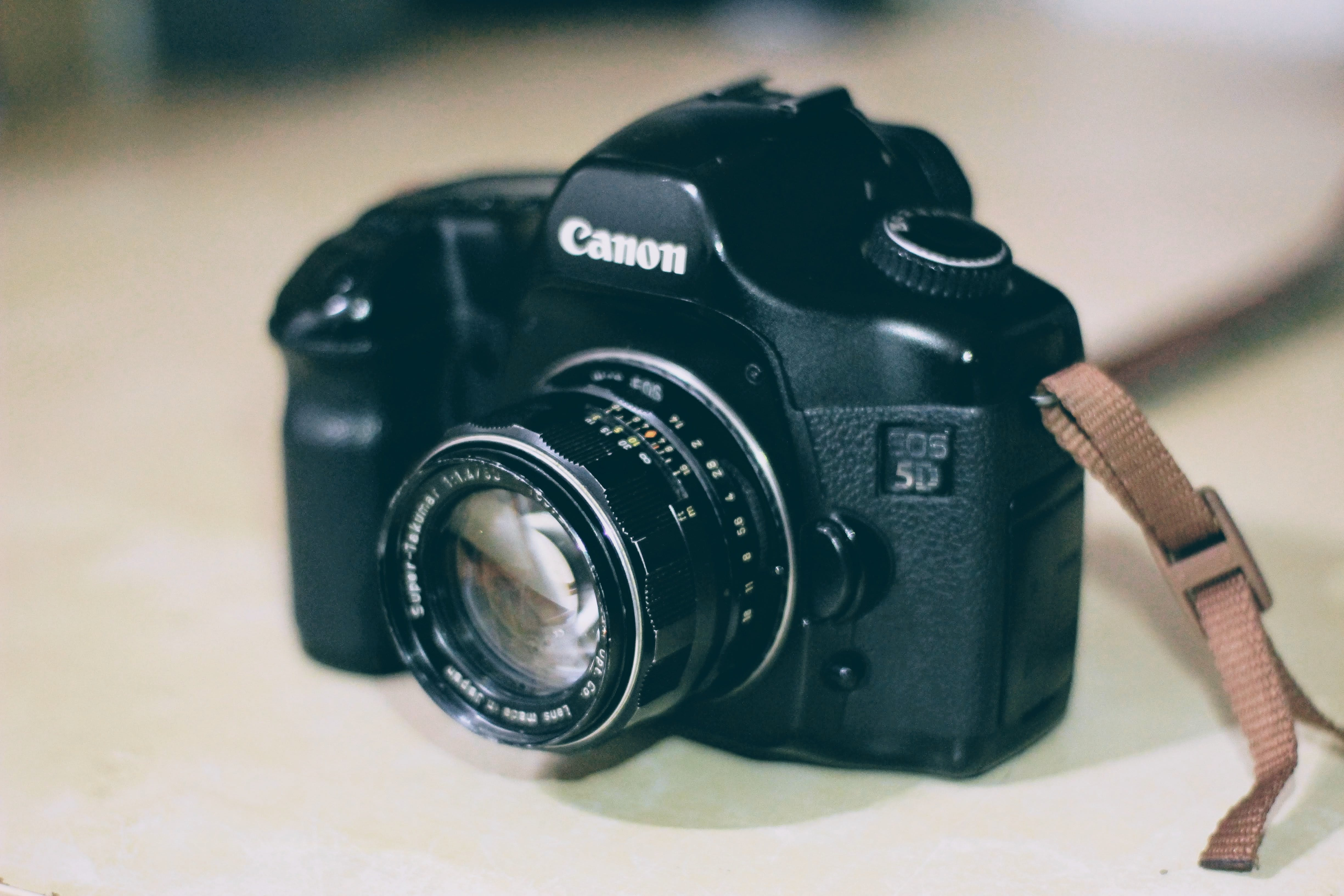 Free stock photo of canon, close up, dslr, focus