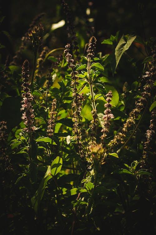 Foto stok gratis alam, bahan, bunga, di luar rumah