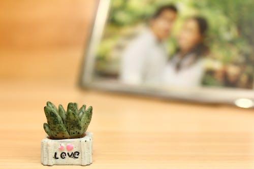 Gratis stockfoto met Aziatisch stel, donkergroene planten, fotoframe, huwelijk