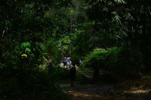 가벼운, 경치, 공원, 나무의 무료 스톡 사진