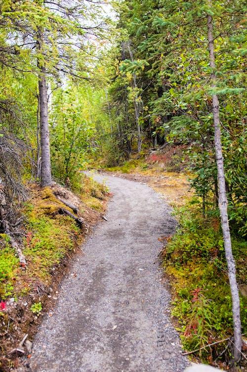 길, 도로, 산길, 숲의 무료 스톡 사진