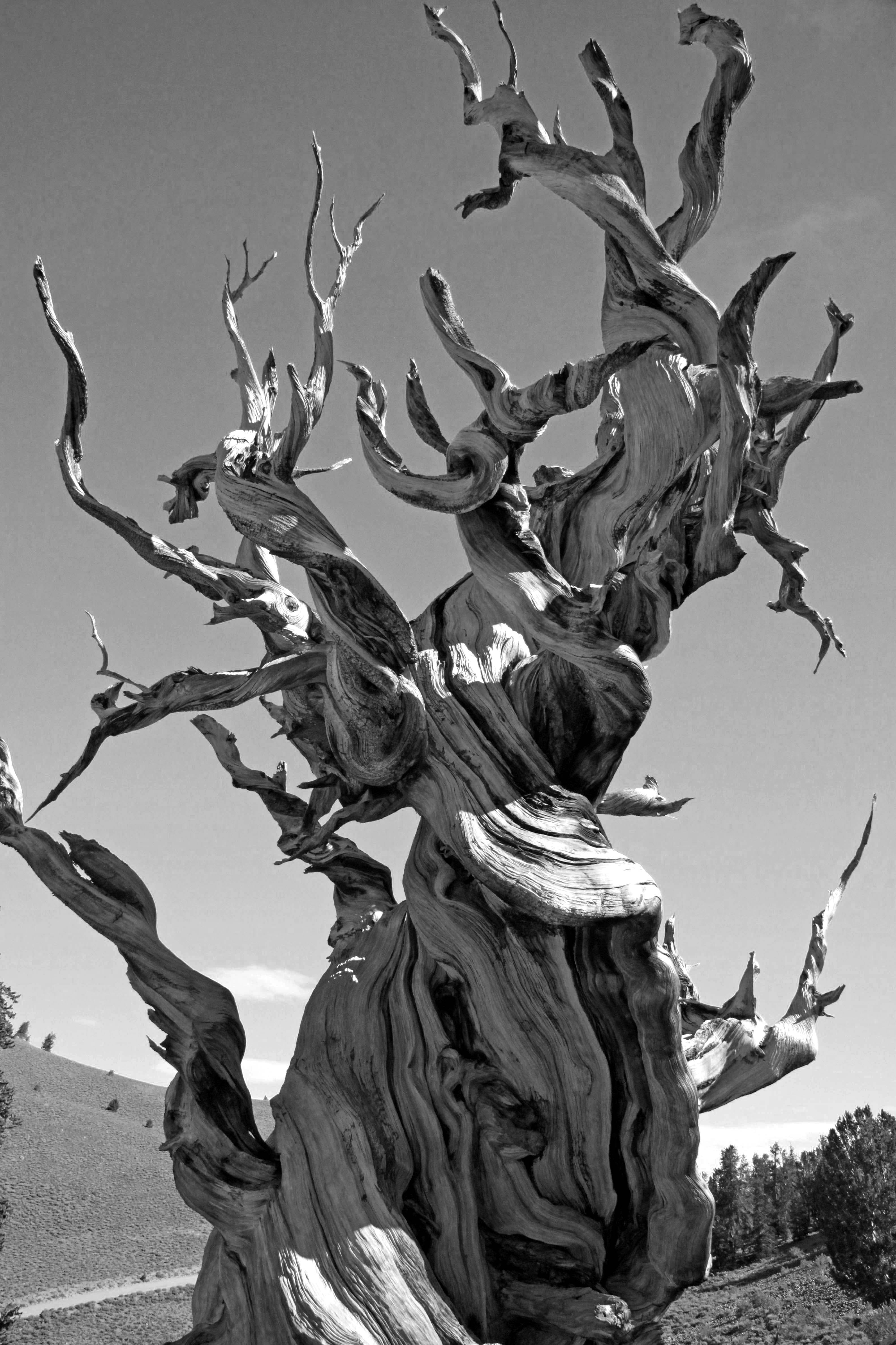 Greyscale Photo of Dead Tree on Dry Land