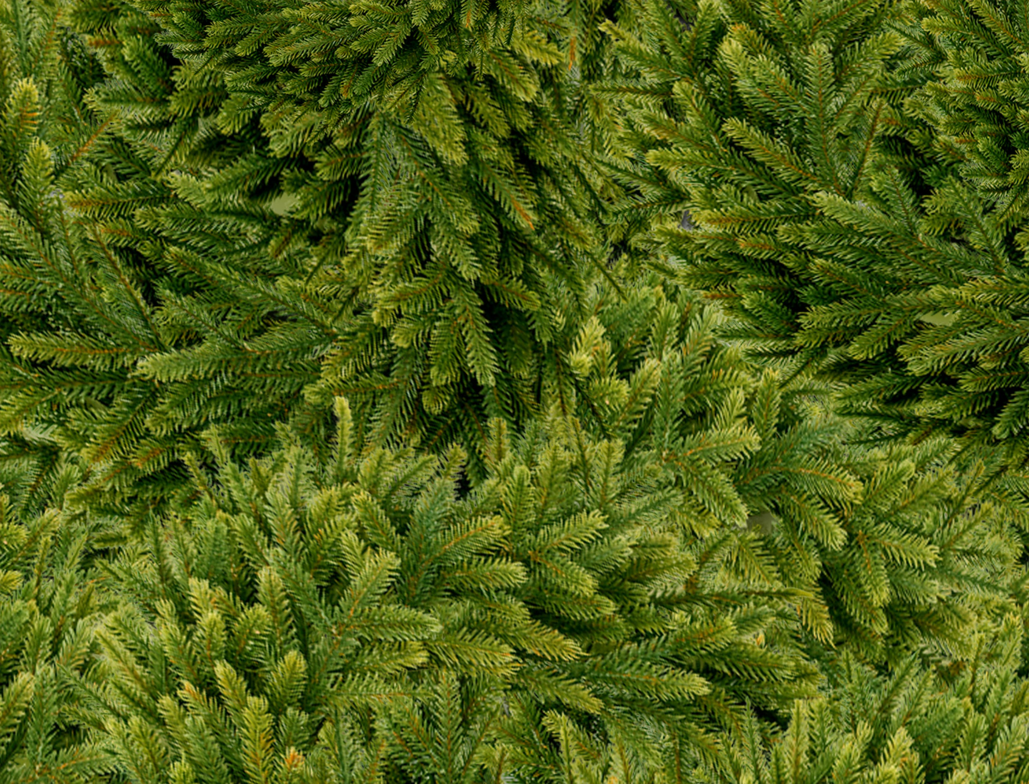 Free stock photo of autumn, christmas, Christmas wreath, dark green